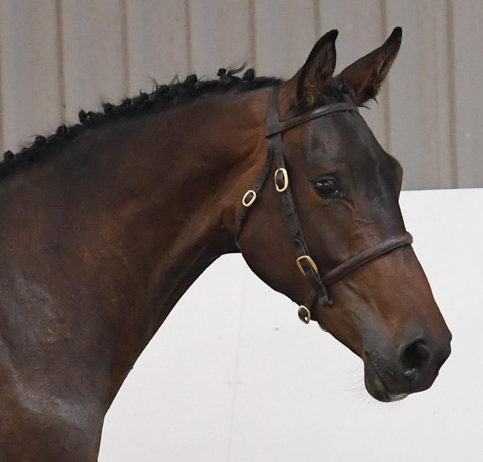 Headshot of the horse